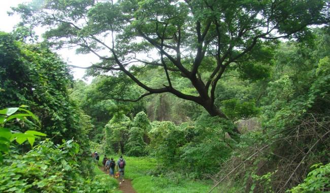 Haunted Places in Mumbai - Sanjay Gandhi National Park