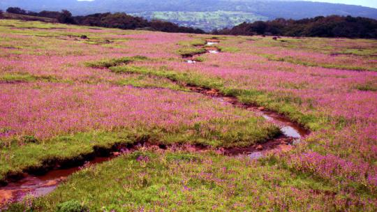 Kaas Plateau